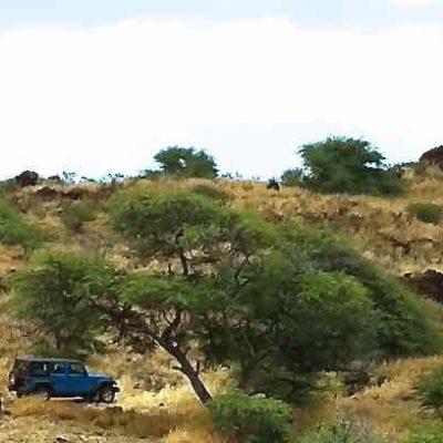 jeep rental lanai